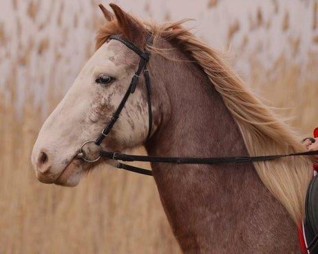 Метафора «Лошадь и повозка»