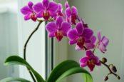 7 советов по выращиванию орхидей